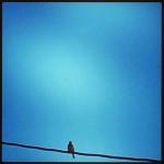 Marita_blå fugl