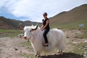 HimalPartner-kollega Silje på en yak i Kina.