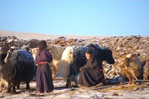 yak-milking-2006