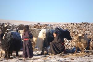 Tibet Reservebilde